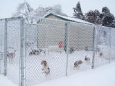 Silly beagles...go back inside where it's heated and warm!